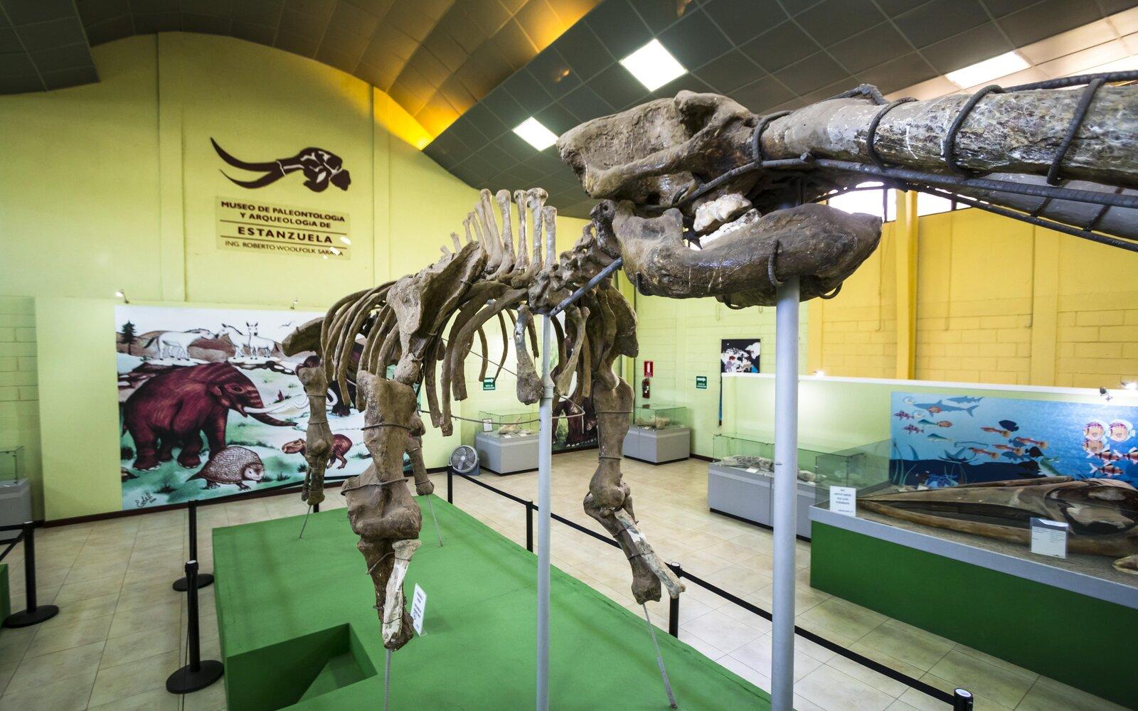 Museo de Paleontología, Arqueología y Geología, Ing. Roberto Woolfolk Saravia